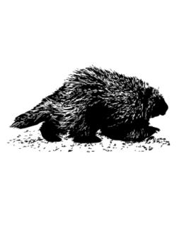 American Porcupine sketch Street Sign