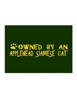 Owned By An Applehead Siamese Sticker