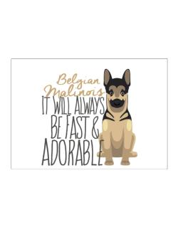 It will always be fast & adorable Belgian malinois Sticker