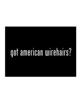 Got American Wirehairs? Sticker