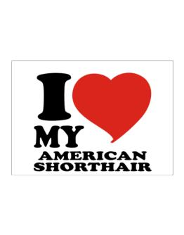 I Love My American Shorthair Sticker
