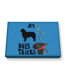 My Australian Shepherd Does Tricks ! Canvas square