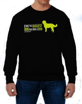 Even The Biggest Dog Has Been A Pup - Labradoodle Sweatshirt