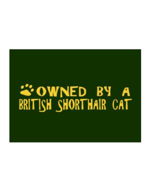 Owned By A British Shorthair Sticker