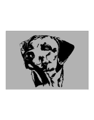 Rhodesian Ridgeback Face Special Graphic Sticker